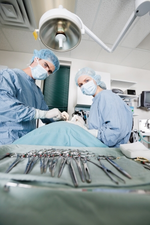 Veterinarian Doctors Performing Surgery At Clinic photo