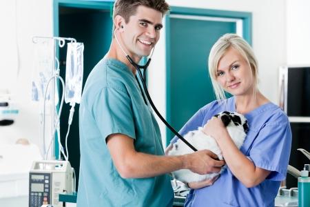 Veterinarian Doctor Examining A Rabbit s Pulse With Female Nurse Stock Photo - 17132802