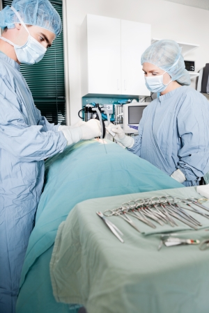 Veterinarian Doctor And Female Assistant Performing A Surgery Stock Photo - 17132804