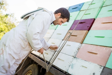 Side view of male beekeeper tying rope to truck with stacked honeycomb crates photo