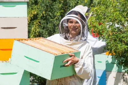beekeeper: Portrait of beautiful beekeeper carrying honeycomb box while working at apiary