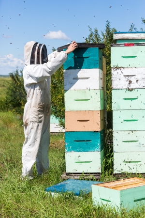 fume: Side view of beekeeper placing a fume board on hive Stock Photo