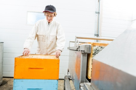 beekeeping: Senior female beekeeper with honeycomb crates working in beekeeping factory
