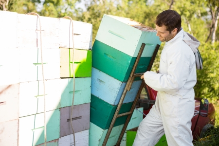 Male beekeeper loading stacked honeycomb crates in truck photo