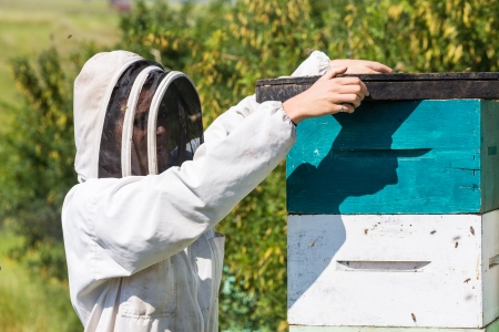 beekeeper: Side view of beekeeper placing fume board on hive Stock Photo
