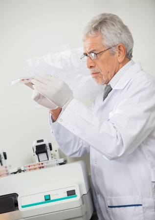 specimen testing: Scientist Examining Microplate