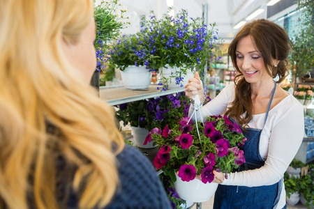 selling service smile: Smiling mid adult florist showing fresh purple flower plant to female customer in shop Stock Photo