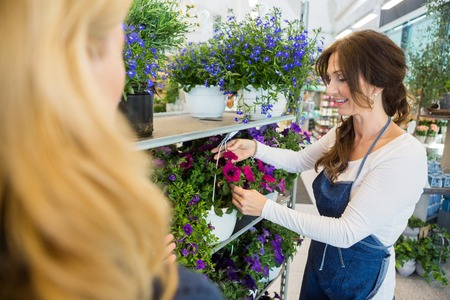 salesgirl: Salesgirl showing fresh flower plant to female customer in shop