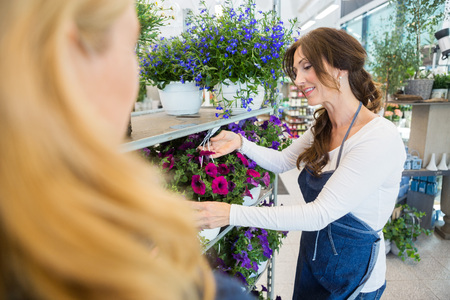 salesgirl: Mid adult salesgirl showing fresh flower plant to female customer in shop