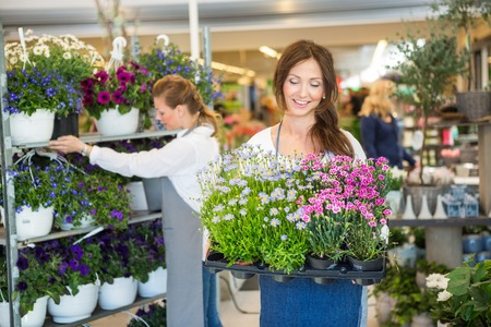 florist shop: Smiling female worker carrying crate full of flower plants with colleague working in background