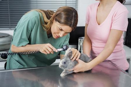 conejo: enfermera de sexo femenino que examina conejo con otoscopio por la mujer en la clínica
