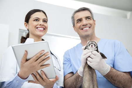 weasel: Low angle view of happy female doctor holding digital tablet while colleague with weasel in clinic