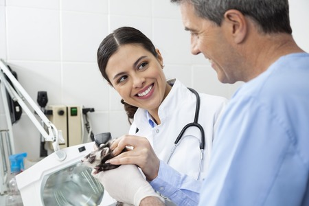 weasel: Smiling mid adult female doctor looking at colleague while examining weasel in clinic