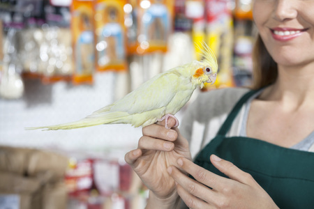 petshop: Cropped image of smiling saleswoman with cockatiel in store Stock Photo