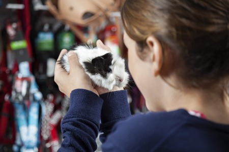 petshop: Girl holding cute guinea pig at pet store Stock Photo