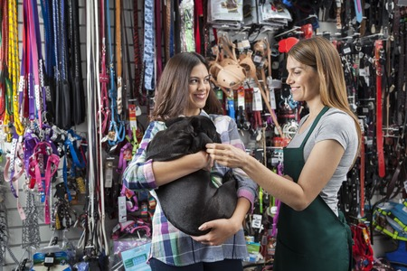 carried: Smiling saleswoman playing with French Bulldog carried by customer in store