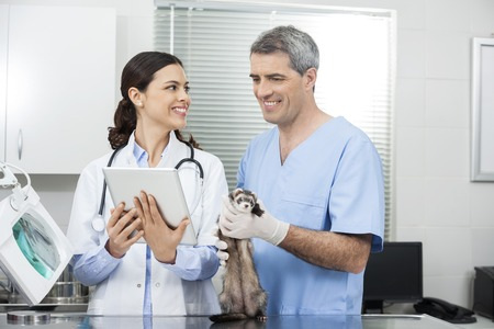 weasel: Happy female doctor showing tablet computer to coworker holding weasel in clinic