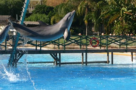 leaping dolphin photo