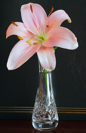 pink easter lily in a cryristal vase Stock Photo