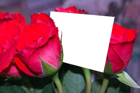 red roses with a copyspace card photo