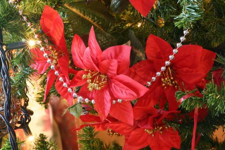 shiney: poinsettia beads and lights on a christmas tree