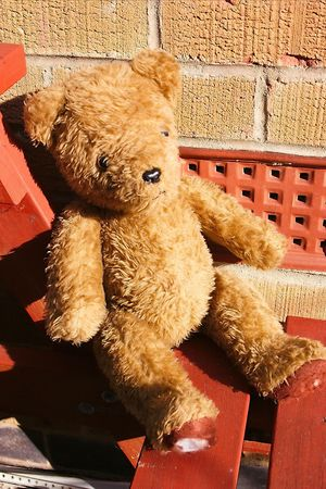 old teddy sunbathing Stock Photo - 320511