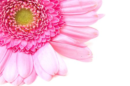 pink zinnia in the corner of the picture with copy space