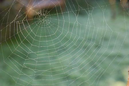 arachnoid: Cobweb coperto di rugiada su una gelida mattina