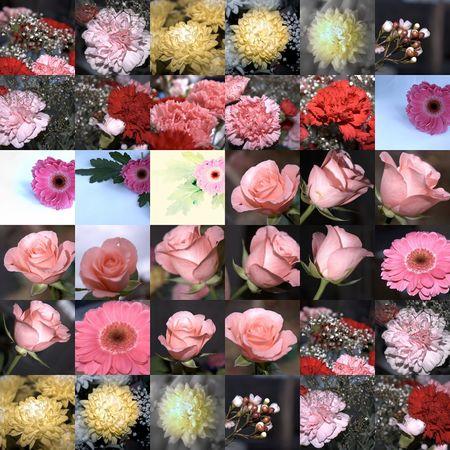 grid of cut flowers photo