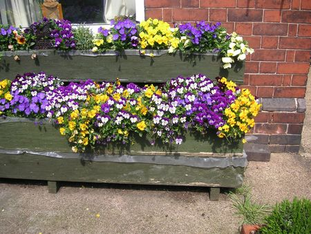 window boxes full of pansies and viola Stock Photo