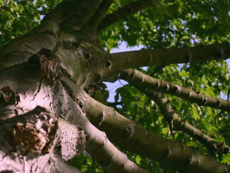 ruggedness: tronco di un albero molto vecchio