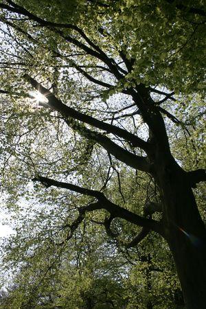 ruggedness: grande vecchio albero con il sole che splende attraverso