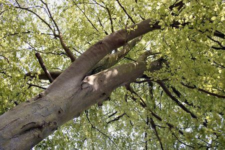 ruggedness: grande vecchio albero che cresce nel bosco