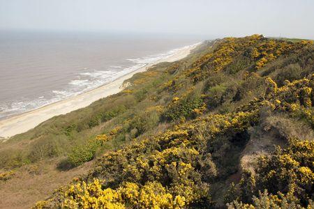 cliff edge: coastal scene of gorse growing on the cliff edge Stock Photo