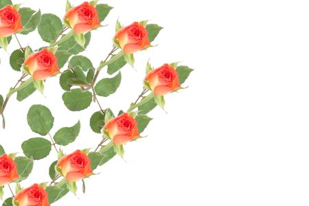 illustration of a of roses set to the side of the image Stock Illustration - 795722