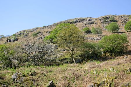 trees and shrubs scattered on a mountain side photo