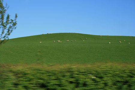 sheep in the top of a field with blue sky above Stock Photo - 1335488
