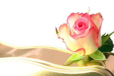 rose on a tin of chocolates over a white background