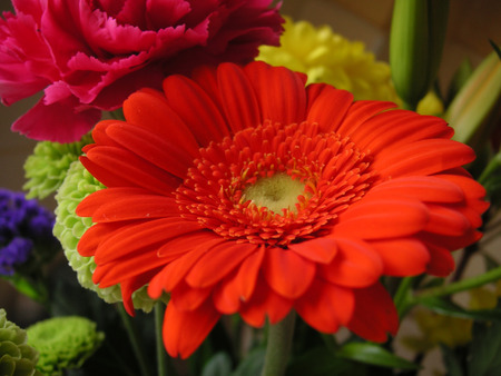 macro shot of a red gerbera in a bouquet of flowers Stock Photo - 1463983