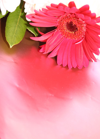 gerbera against a pink paper background Stock Photo - 1559278