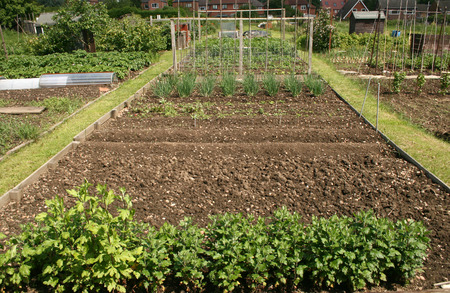 well kept allotment plot with vegetables and plants