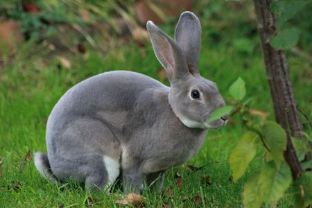 wild grey bunny capture in the meadows photo