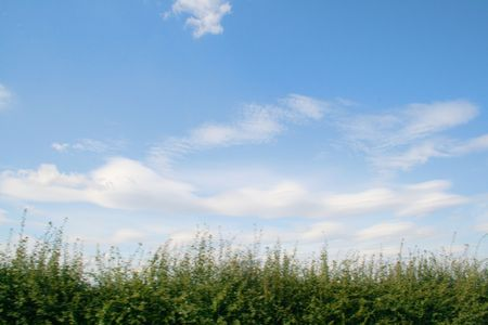 hedging: clouds and hedging taken on the move from a car