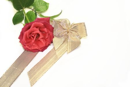 red rose and gold ribbon for valentines day photo