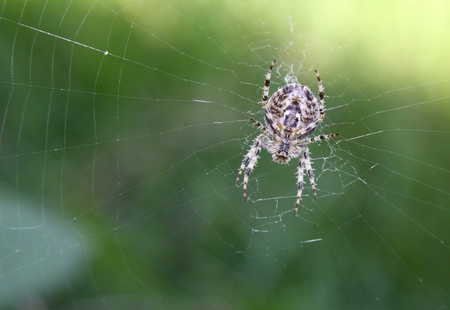web2: underside of a spider as it sits in the center of its web