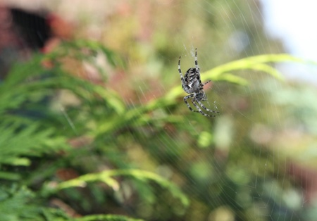 web2:  a spider as it sits in the center of its web Stock Photo