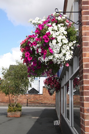 petunia: very large hanging baskets full of petunia flowers used to decorate shop exterior