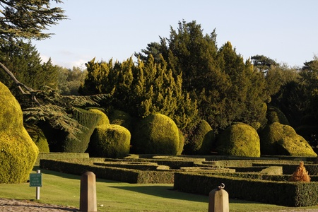 formal garden with lovely shaped hedges and trees Stock Photo - 11137361