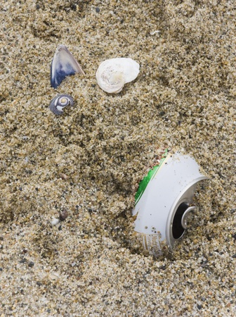 littering: An aluminum can is partly buried in the sand near 3 seashells; shells should be in the sand, not a can