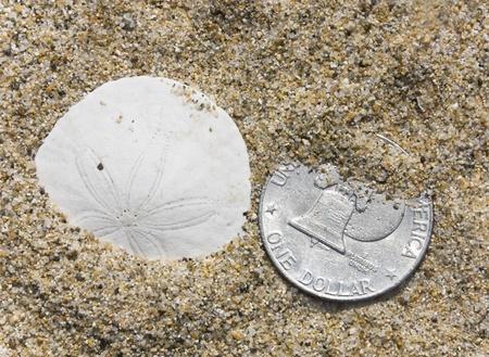 sand dollar: Un d�lar de arena se sienta junto a un d�lar de plata en la arena